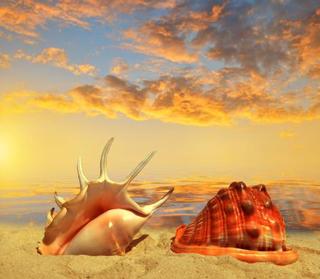 Sea shells on beach in the sunset Stock Photo