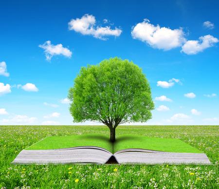 educacion ambiental: Libro de la naturaleza con el árbol en el prado.