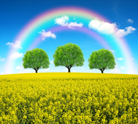 yellow flower tree: Rainbow over spring landscape with rape field Stock Photo