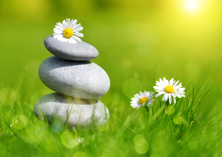 Green grass with stones and daisies, soft focus. Spa concept Stockfoto