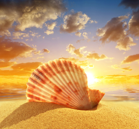 sea shell: Sea shell on beach in the sunset Stock Photo