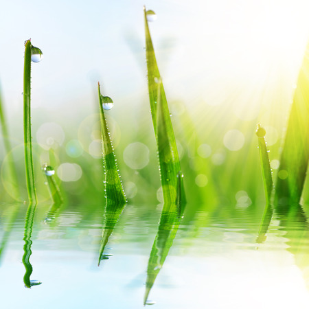 fresh leaf: Fresh green grass with water drops closeup. Soft focus. Nature Background