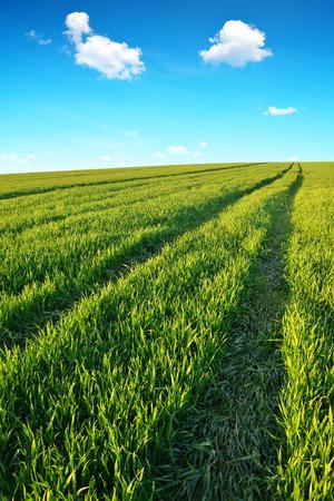 blue green landscape: Green field with blue sky. Spring landscape