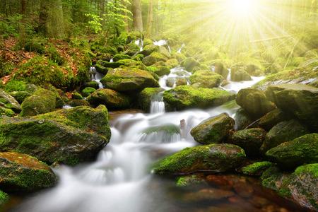 beck: Mountain creek in the National park Sumava-Czech Republic