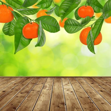 mandarine: Mandarine tree with wooden planks.