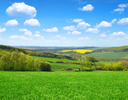 blue green landscape: Green field with blue sky. Spring landscape.