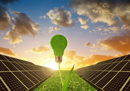 Solar panels with lightbulb on plant against sunset sky.Clean energy.