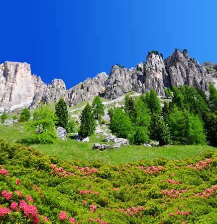 vajolet: Beautiful mountain landscape in Dolomites at the foreground of blooming azaleas,Trentino, South Tirol, Italy