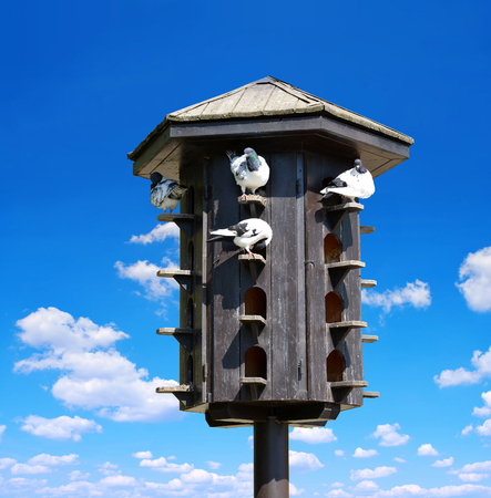 roost: Wooden dovecote with pigeons Stock Photo