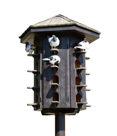 pigeon holes: Wooden dovecote with pigeons isolated on white background.