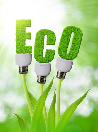 invent: Eco bulb growing on plant. Clean energy concept. Stock Photo