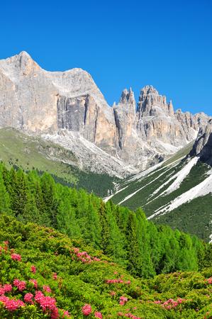 torri: Torri del Vajolet in Dolomites at the foreground of blooming azaleas,Trentino, South Tirol, Italy Stock Photo