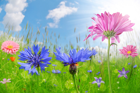 Colorful flowers in the meadow. Summer season.