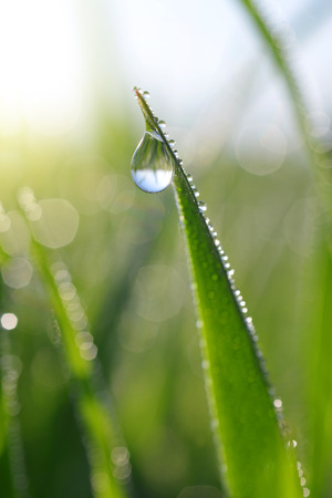 wallpaper vibrant: Fresh green grass with dew drops closeup. Nature Background. Stock Photo
