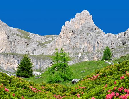 rosengarten: Beautiful mountain landscape in sunny day. Valle del Vajolet in Dolomites,Italien Alps