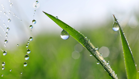 Dew drops on green grass and spider web closeup. Nature Background. Stock Photo