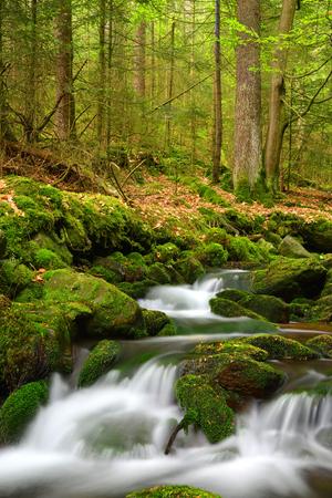 シュマバ国立公園-チェコの渓流