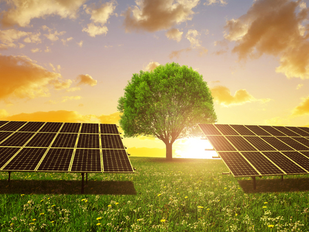 Solar energy panels and tree on meadow at sunset. Sustainable resources. Stock Photo