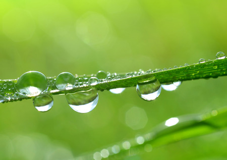nature green: Fresh green grass with water drops closeup. Nature Background