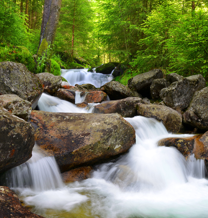 creek: Waterfall on creek in mountain forest. Stock Photo