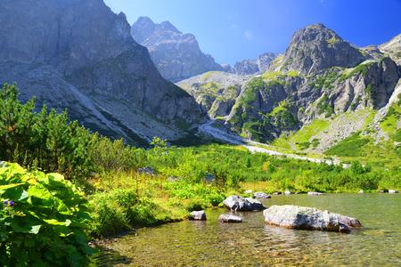 美しい夏の風景です。国立公園高タトラの山湖 Zelene プレソ。スロバキア、ヨーロッパ。