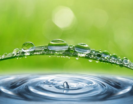 water plants: Fresh green grass with dew drops closeup. Nature Background. Stock Photo