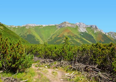 tatry: View of the Belianske Tatry Mountains, Slovakia