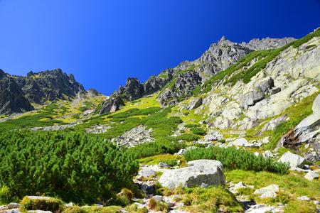 Summer mountain landscape. Mlynicka Valley in Vysoke Tatry (High Tatras), Slovakia