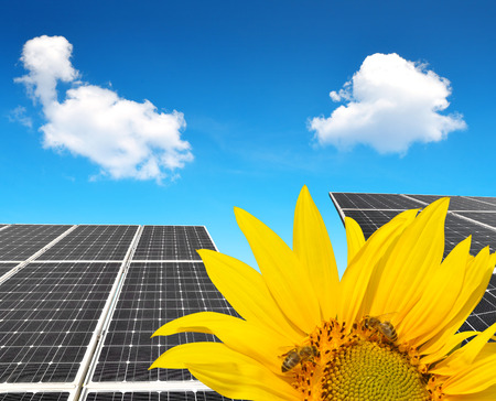 Blooming sunflower in the background solar panels. Green energy concept. Stock Photo