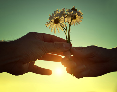 Hand gives a flowers marguerites with love at sunset. Romantic concept. Stock Photo