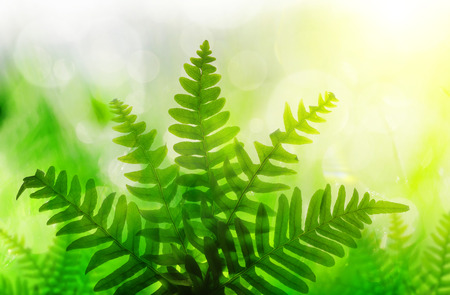 Green fern leaves on nature blurred background. Stock Photo
