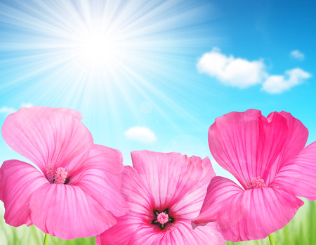 beautiful weather: Pink flowers on the meadow. Spring background.
