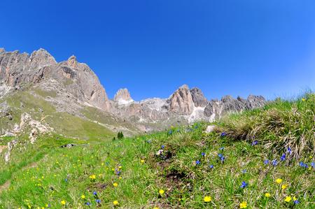 vajolet: Flowers on mountain meadow, Valle del Vajolet in Dolomites,Italien Alps