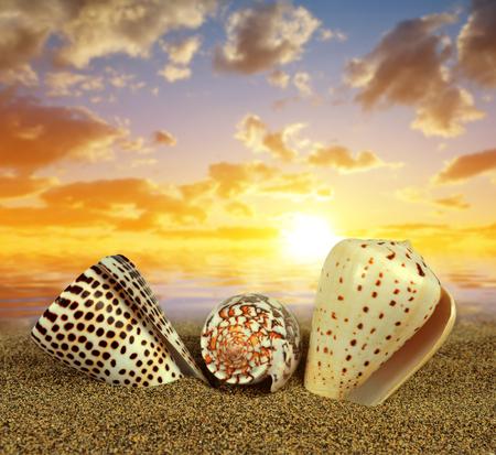 Tropical sea shells on sandy beach at sunset. Stock Photo