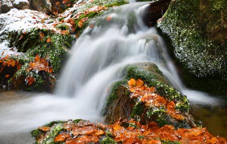 torrent: Winter creek in the national park Sumava,Czech Republic.