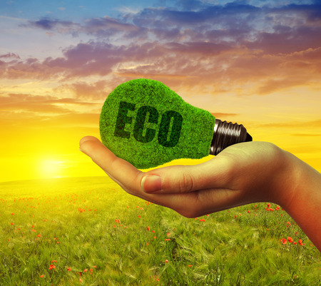 bulb fields: Hand holding ecological light bulb at sunset. Green energy concept.