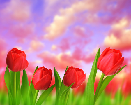 botanical garden: Red tulips with green leaves at sunset. Stock Photo