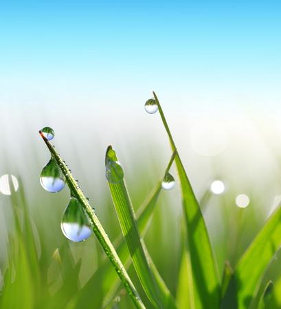 Feuilles d'herbe verte fraîche avec des gouttes de rosée.