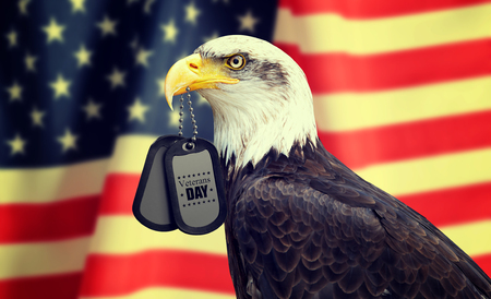 Bald Eagle holds a dog tags in his beak against a American Flag. Veterans Day Concept.