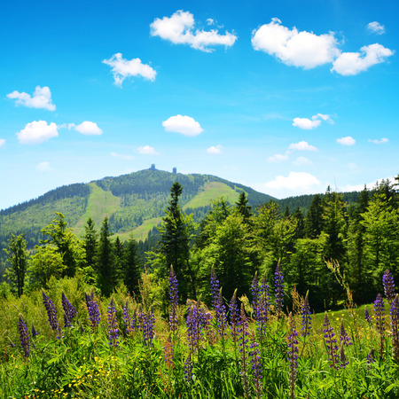 View on mountain Grosser Arber in National park Bavarian forest, Germany. Spring landscape.