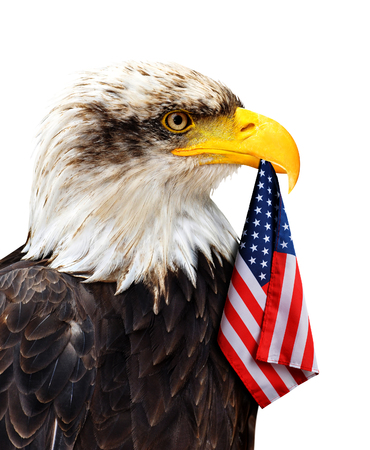 The Bald Eagle holds in the beak of the United States Flag isolated on a white background. Stock Photo