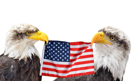The Bald Eagles holds in the beak of the United States Flag isolated on white background. Stock Photo