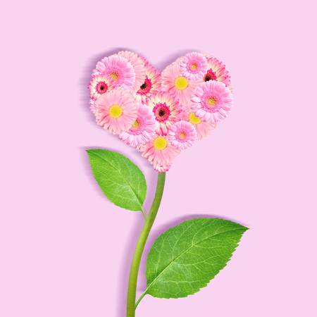 Heart of pink gerbera flowers.