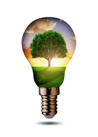 Eco light bulb isolated on a white background. Concept of clean energy. |