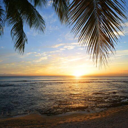 Kokospalm bij zonsondergang. Tropische kust van het eiland Mauritius. Indische Oceaan.