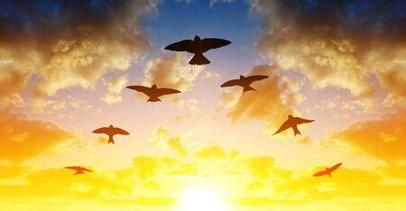 Silhouette di uccelli che volano in formazione a V al tramonto. Archivio Fotografico