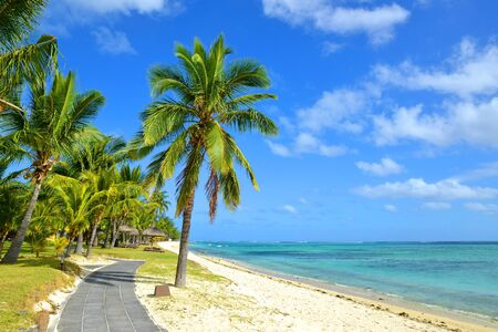 Coconut palm trees on tropical sandy beach of Mauritius island. Indian ocean.