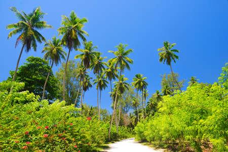 Tropical landscape with coconut palm trees in La Digue Island, Seychelles. Zdjęcie Seryjne