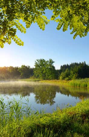 Morning by the pond. Summer  landscape at sunrise.