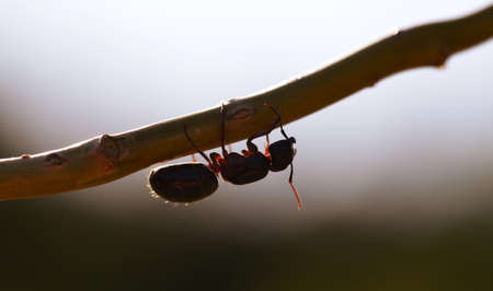Ant walking on the tree branch at sunset. Nature background.